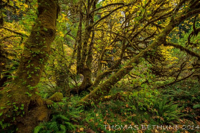Prairie Creek Autumn Preview-1