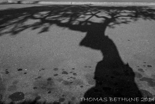 SHADOW ON THE PAVEMENT, EUREKA, JULY 24, 2014