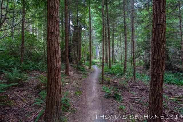 Spruce Flat-1