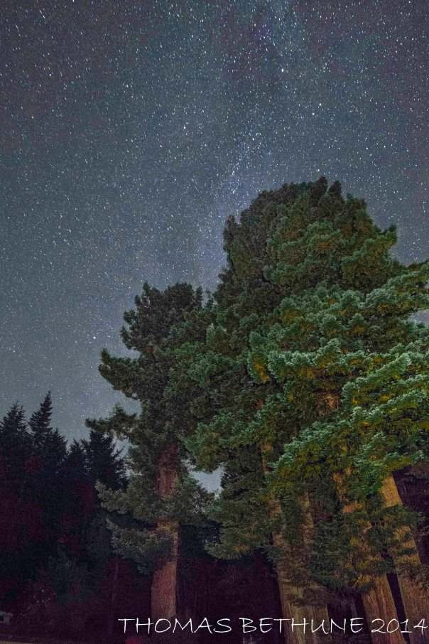 Redwoods in our yard reaching for the stars - Last night.