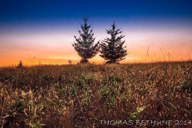 Illuminated Meadow