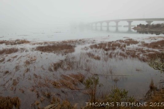 High Tide in the Mist