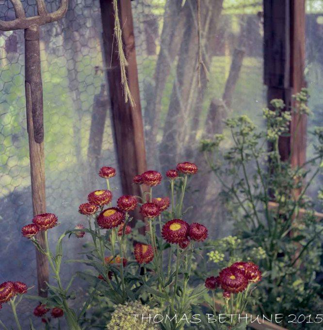In My old garden