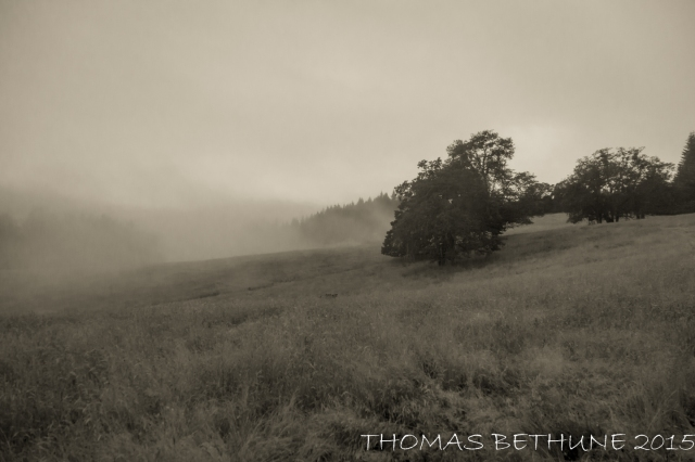 humboldt fog (1 of 1)-2