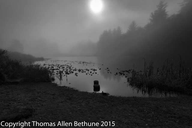 foggy_morning_at_the_old_mill_pond-1