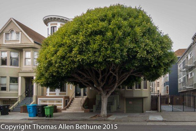 20151202_sidewallk_tree_01